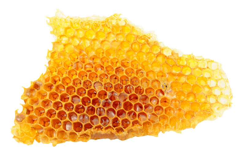 Honey Bee Wax Honeycomb. Cells with honey isolated on a white background royalty free stock photos