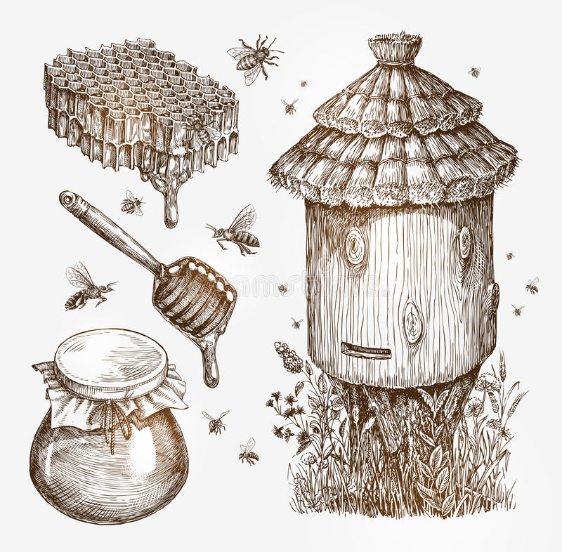 Honey, beekeeping, bees. Collection vintage sketch vector illustration royalty free illustration