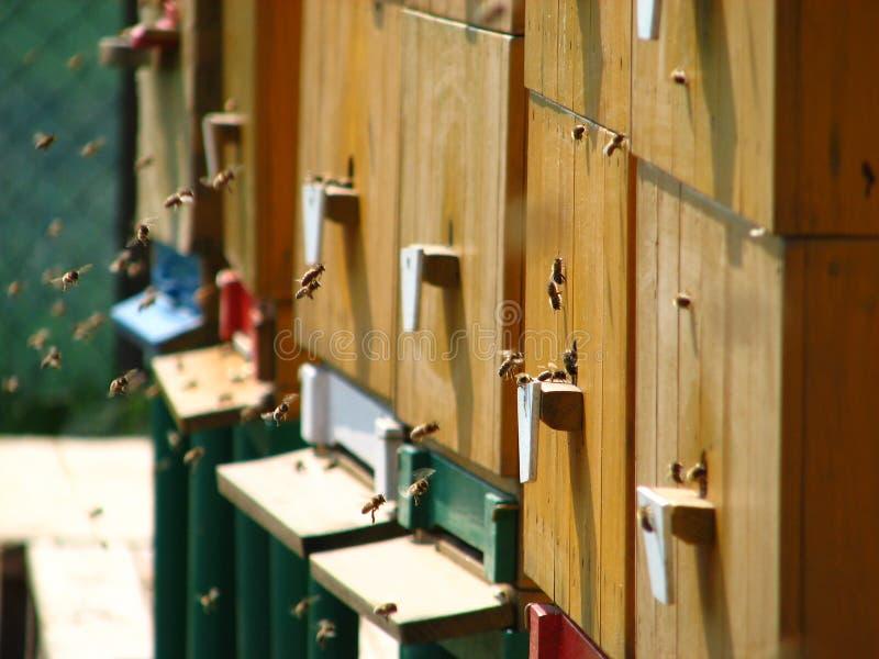 Honey-bees royalty-vrije stock afbeeldingen