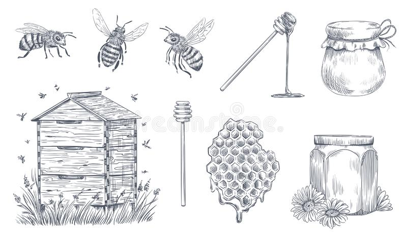 Honey bees engraving. Hand drawn beekeeping, vintage honey farm and honeyed bee pollen vector illustration set. Honey bees engraving. Hand drawn beekeeping vector illustration