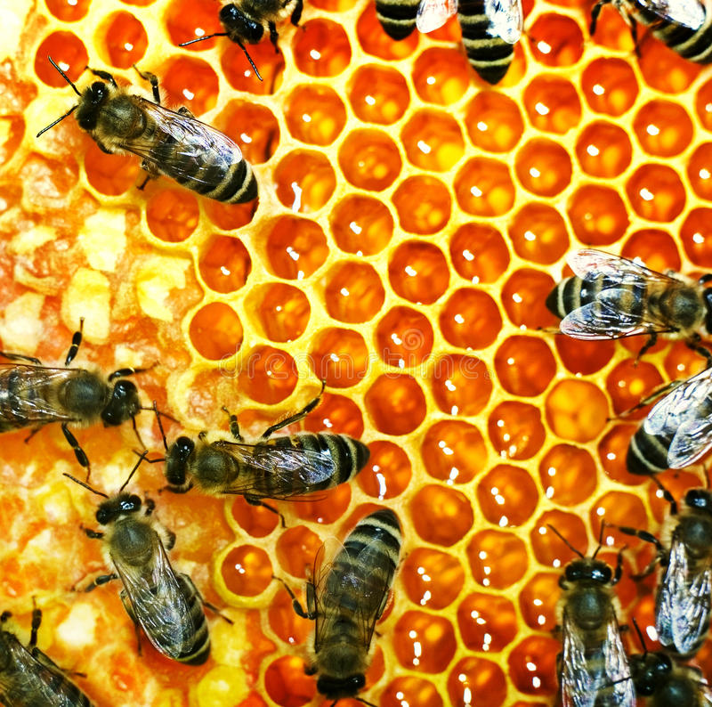 Honey bees on the hive stock photo
