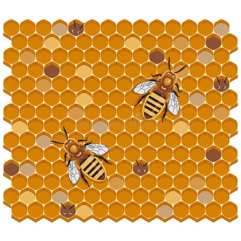Honey Bees on Honeycomb, vector illustration royalty free illustration