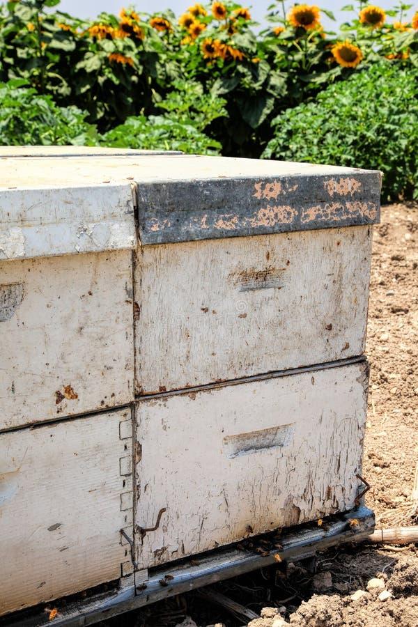 Honey Bees vuela adentro y volando de la colmena Las abejas recogen el néctar y hacen la polinización de las plantas de florecimi foto de archivo libre de regalías
