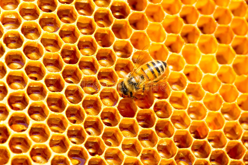 Honey cells pattern.bees work on honeycomb. royalty free stock image