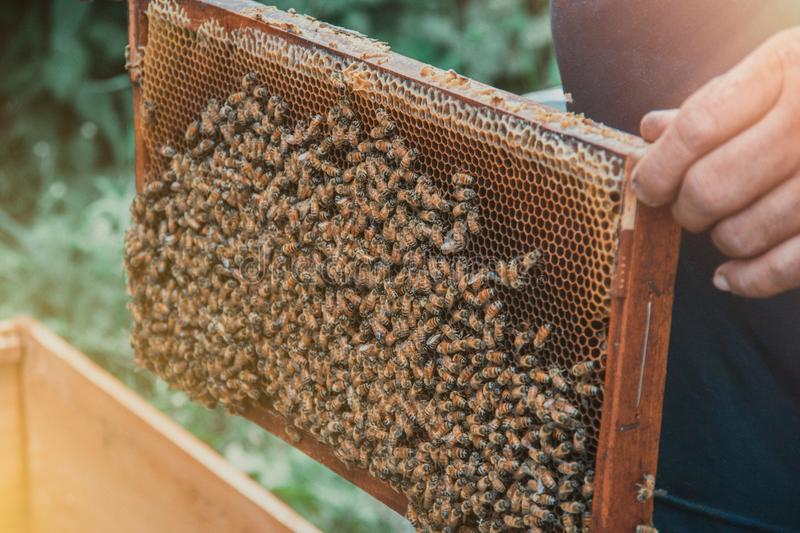 Honey cells and working bees stock images