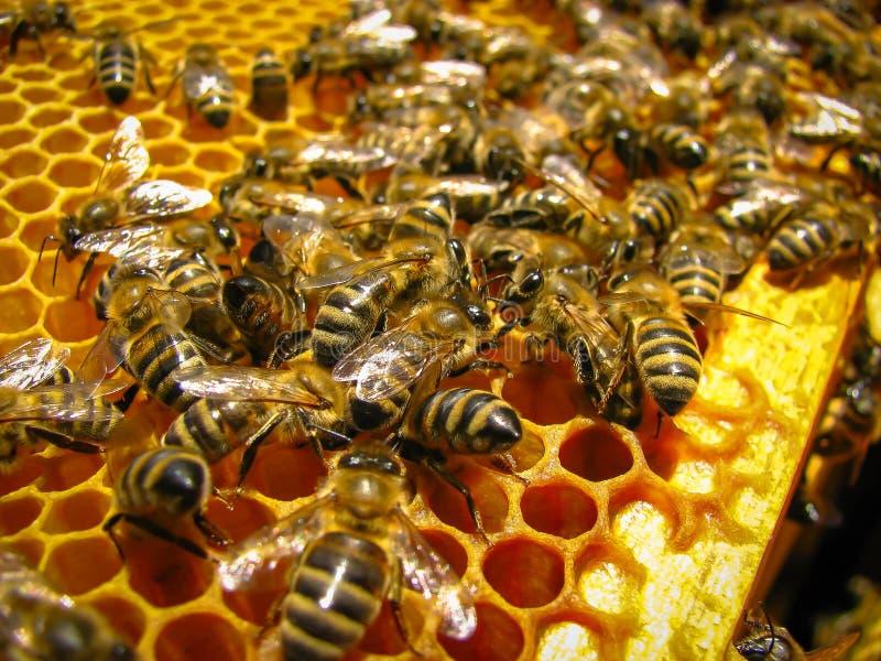 Honey Collection fotos de stock royalty free