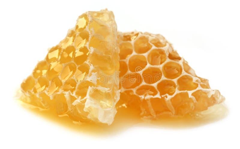Honey Comb royaltyfri foto