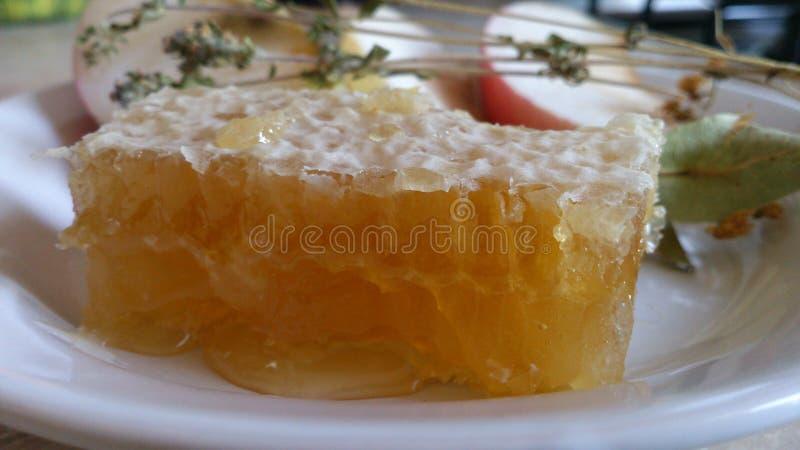 Honey Comb fotos de stock royalty free