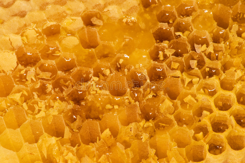 Download Honey in the comb stock image. Image of nutrition, honeycell - 8641409