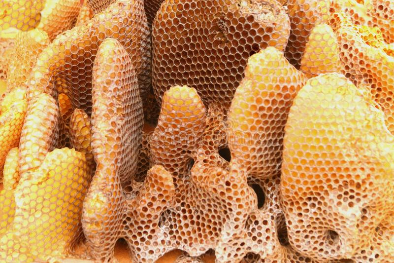 Honey Comb imagem de stock royalty free