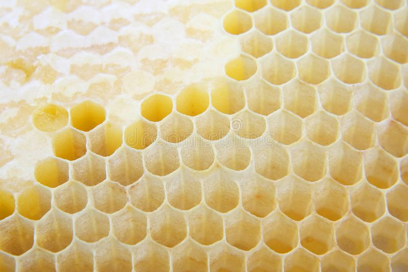 Honey comb close up. Sweet dessert. High calorie food royalty free stock images