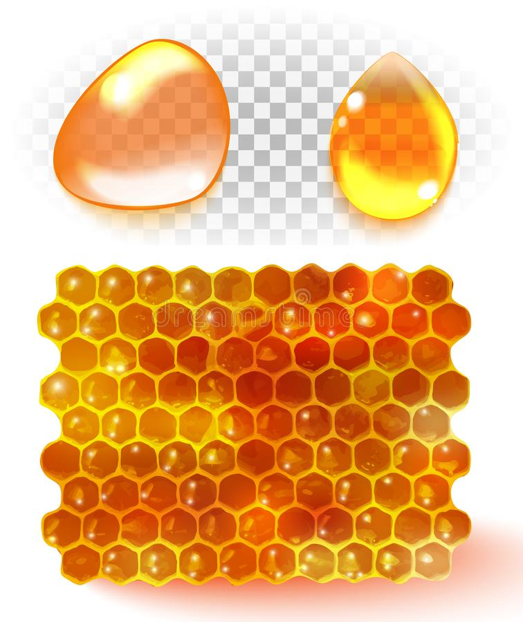 Honey comb, honey drop isolated on white background. Vector royalty free illustration
