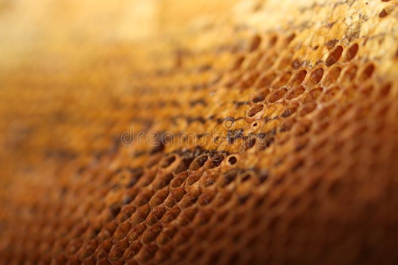 Download Honey comb stock photo. Image of medicine, candy, beekeeping - 101726120