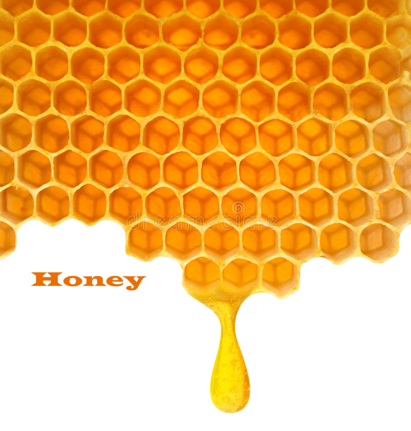 Honey in comb. Honey macro in comb texture pattern background