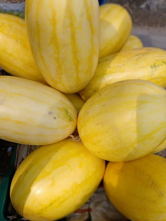 Honey Dew Melon immagine stock libera da diritti