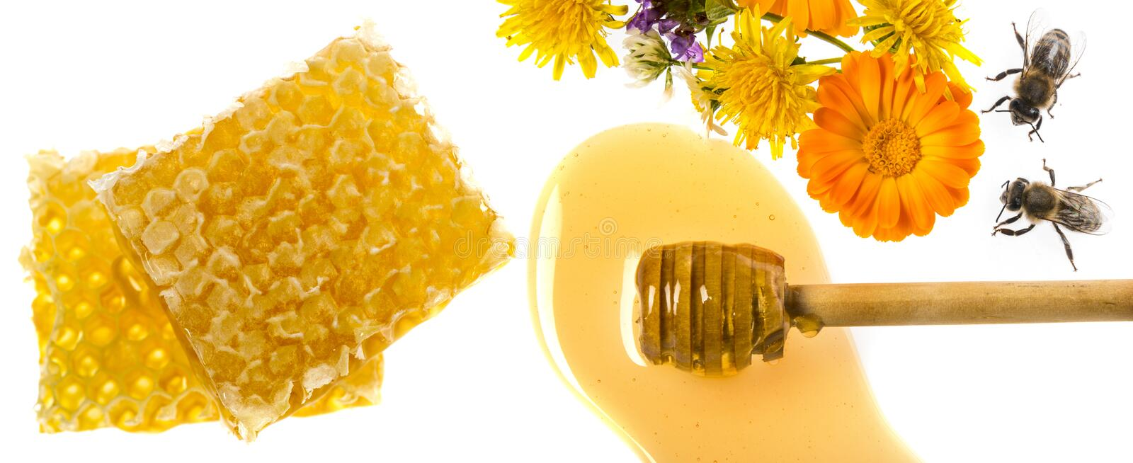 Fresh honey close up. Honey dripping from flower honey dipper isolated on a white background royalty free stock photo