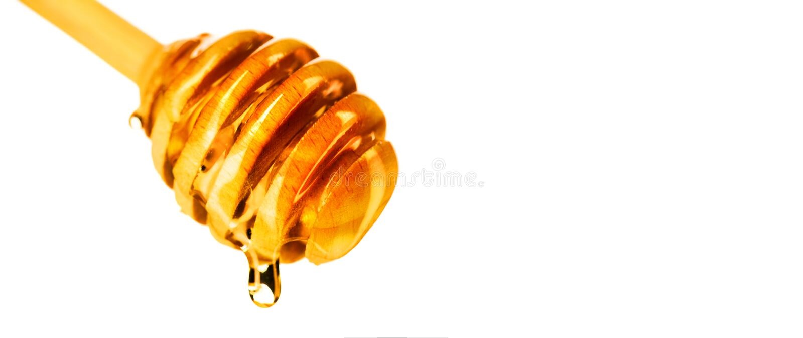 Honey dripping from honey dipper isolated on white background. Thick honey dipping from the wooden spoon. Honey dripping from honey dipper isolated on white stock photos