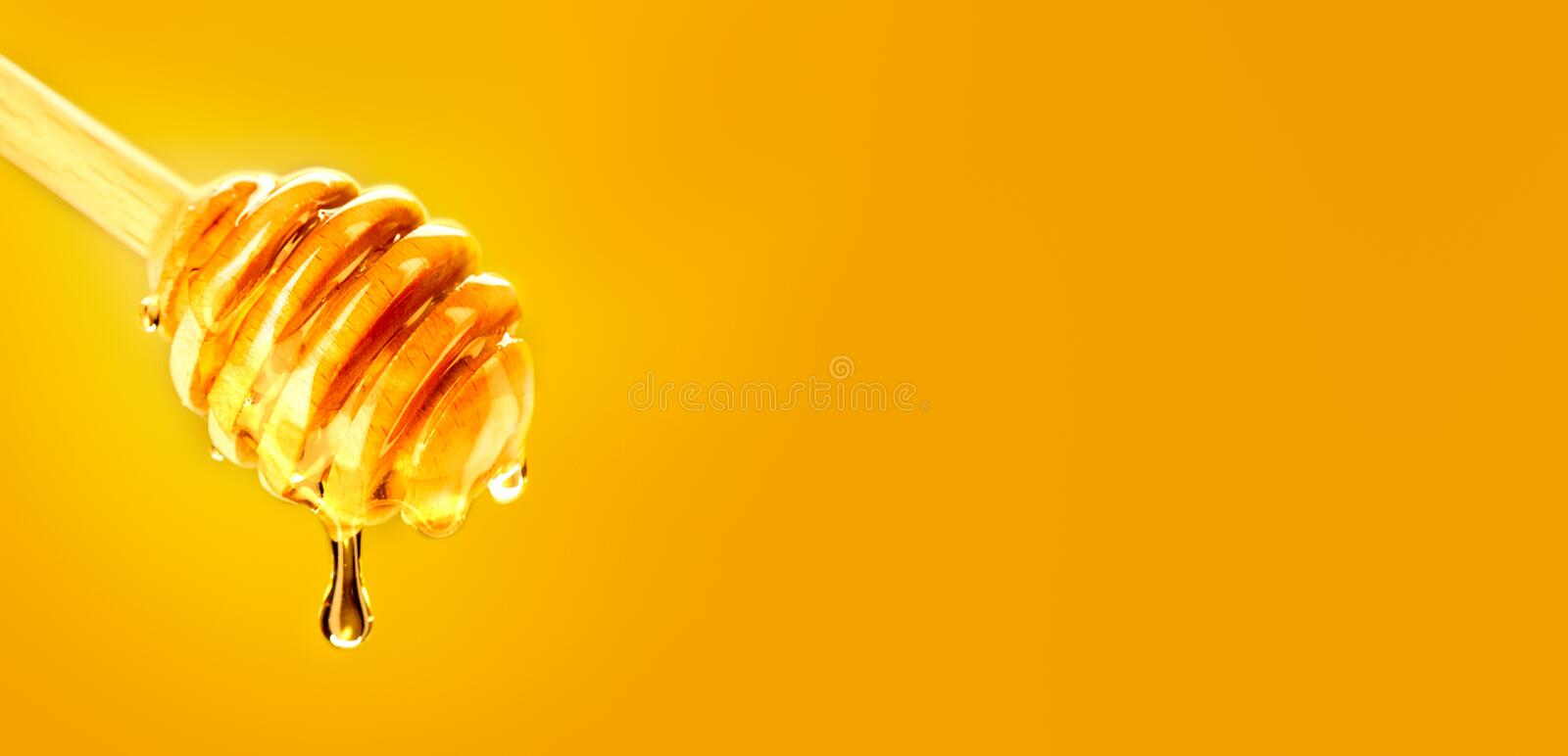 Honey dripping from honey dipper isolated on yellow. Thick honey dipping from the wooden spoon. Honey dripping from honey dipper isolated on yellow. Thick honey royalty free stock images