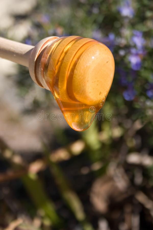 Honey Drizzle 4 stock images