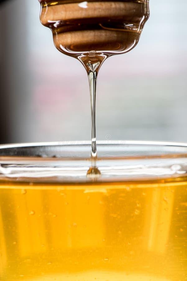 Honey Drizzling From Dipper Back na bacia fotografia de stock royalty free