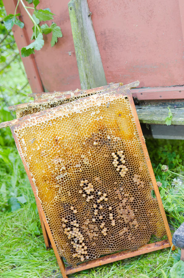 Honey frame. A honey frame leaning against a beehive stock images