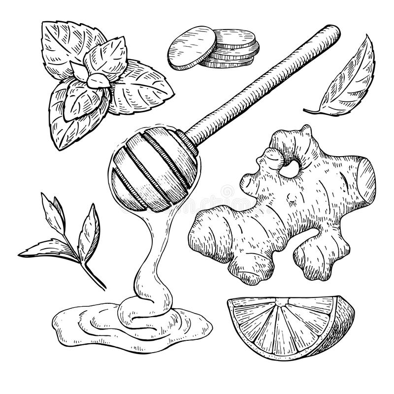 Honey, ginger, lemon and mint vector drawing. Jar, wooden spoon, royalty free illustration