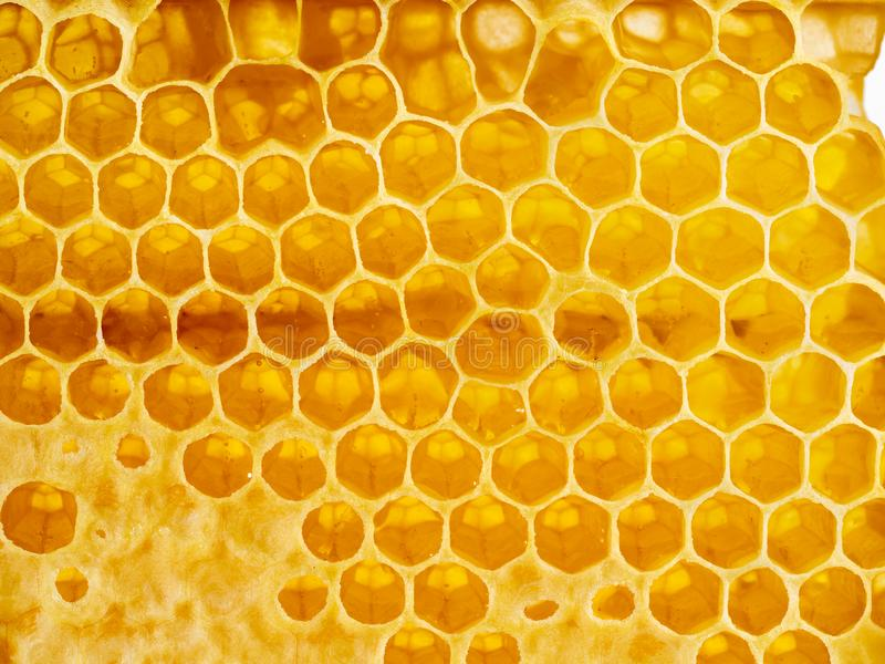 Honey in honeycomb, close-up, macro, top view royalty free stock images