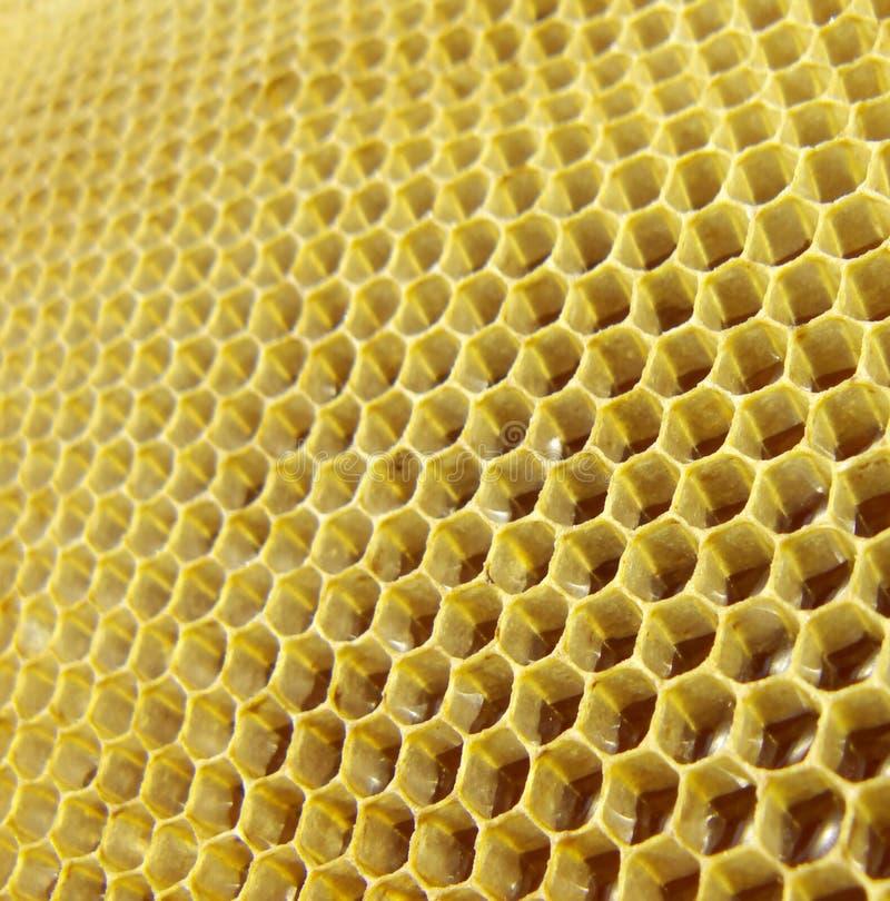 Honey in honeycombs royalty free stock photos
