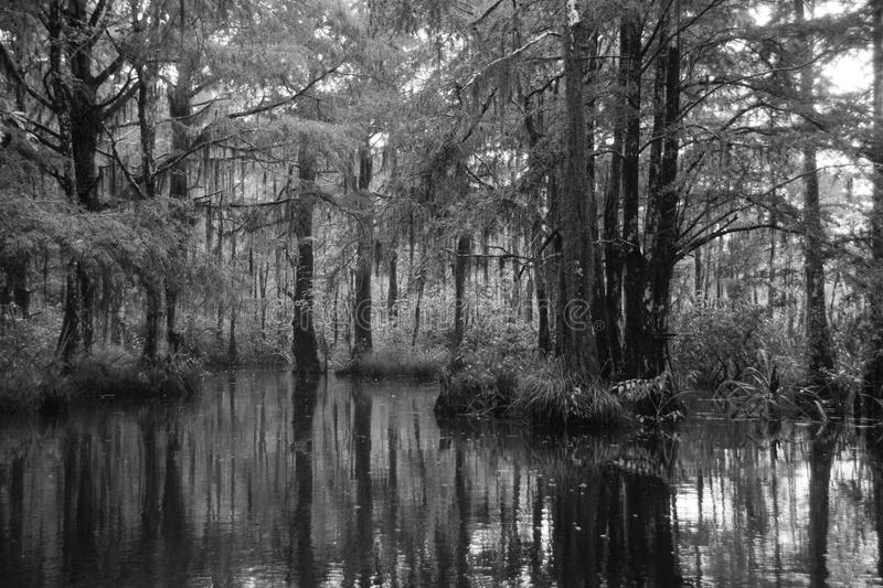 Honey Island Swamp fotos de stock