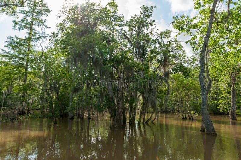 Honey Island Swamp Tour With-Dschungel-Wald und Baum in New Orleans, Louisiana stockbilder