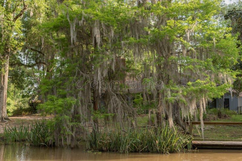 Honey Island Swamp Tour With-Wasser und -baum in New Orleans, Louisiana stockfotografie