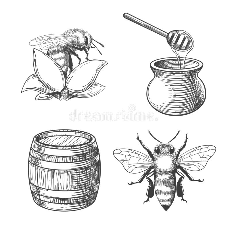 Free Honey Pot And Bee Engravings Stock Image - 155844981