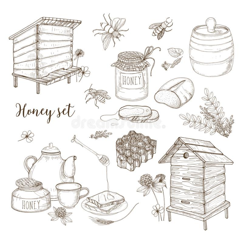 Honey production, beekeeping or apiculture set - honeycomb, man-made beehives, wooden dipper, bees, teapot hand drawn in stock illustration