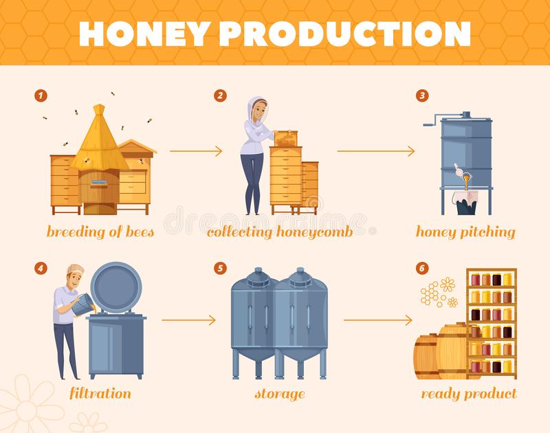 Honey Production Process Cartoon Flowchart. Apiary honey production cartoon flowchart poster from bees breeding collecting honeycombs to storage infographic royalty free illustration