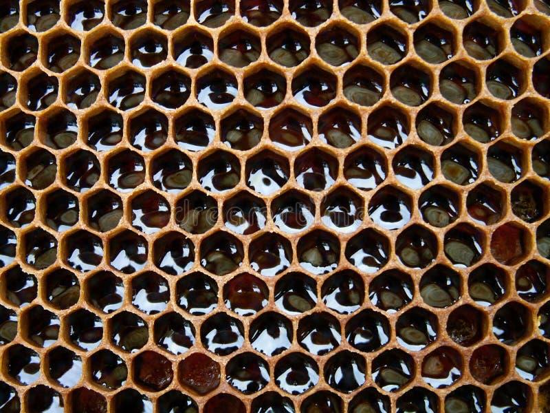 Honey texture stock photo