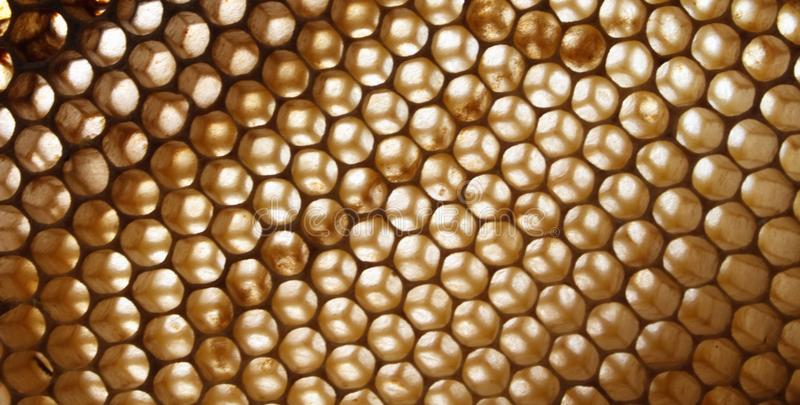 Honey texture without honey royalty free stock photos