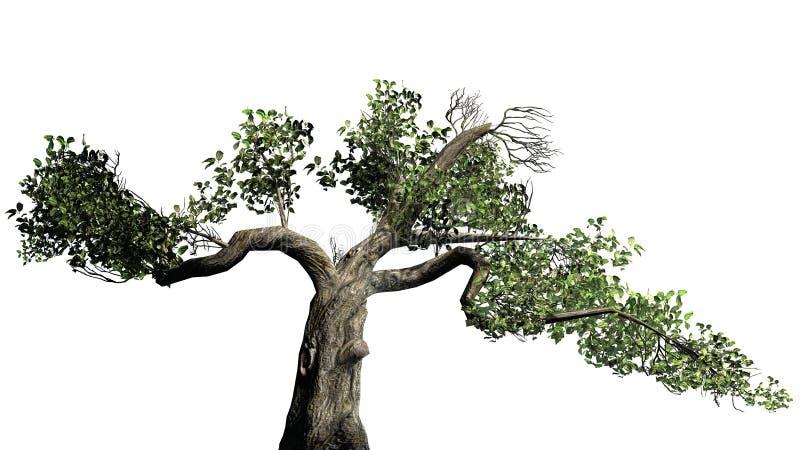 Honey Tree - op witte achtergrond wordt geïsoleerd die royalty-vrije stock foto's
