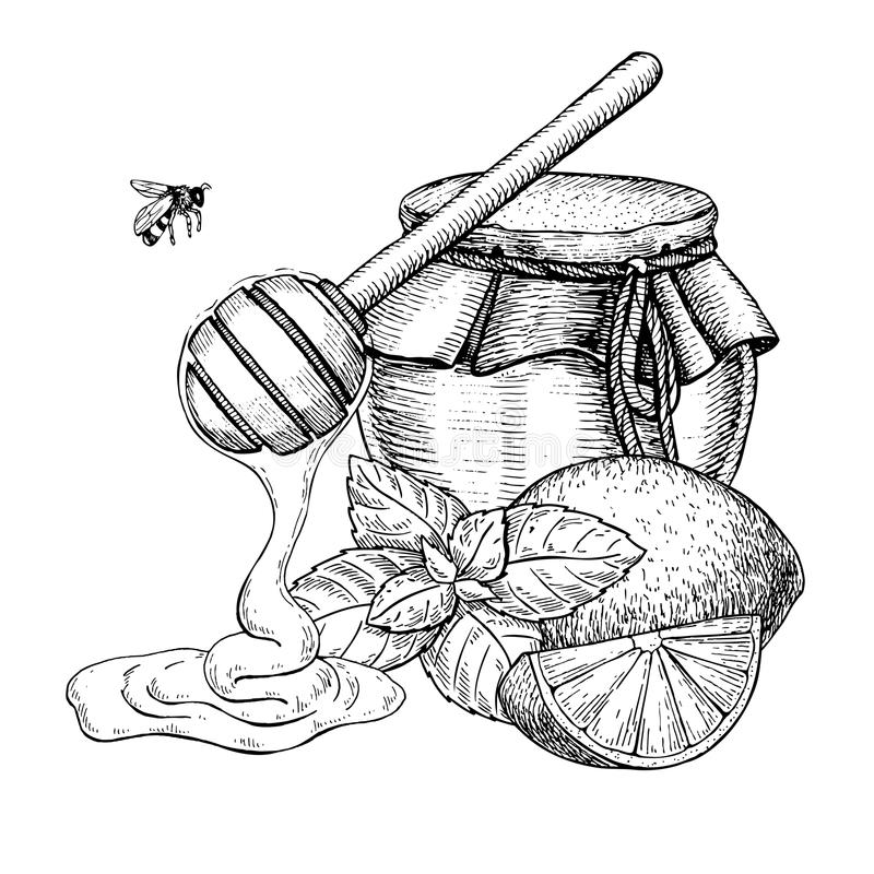 Free Honey With Lemon And Mint Vector Drawing. Jar, Wooden Spoon, Hon Royalty Free Stock Image - 108909486
