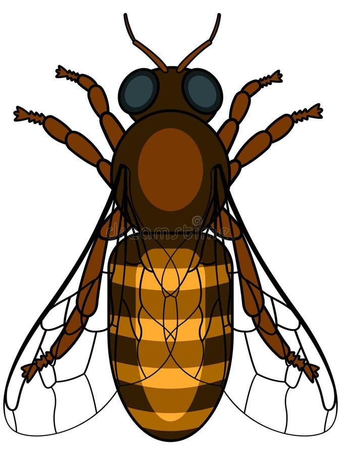 honeybee illustrazione vettoriale