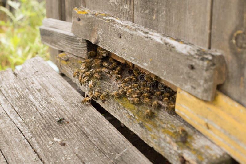 honeybee fotos de stock
