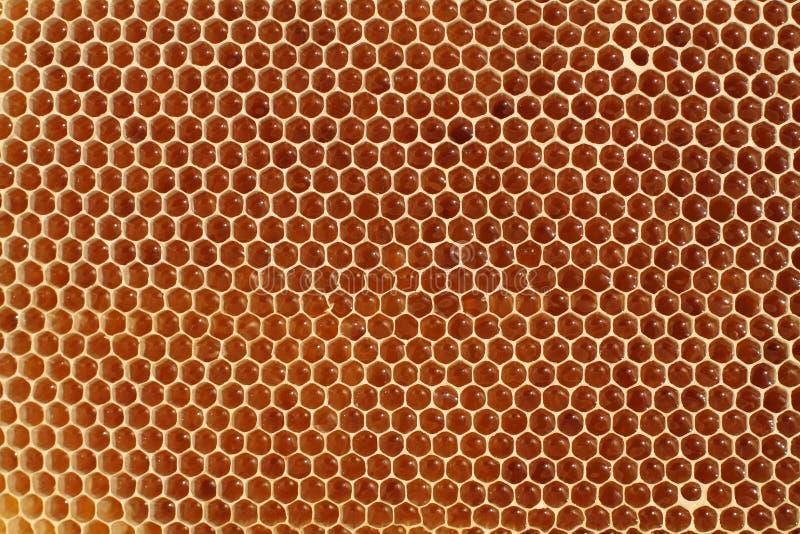 honeycell 免版税库存图片