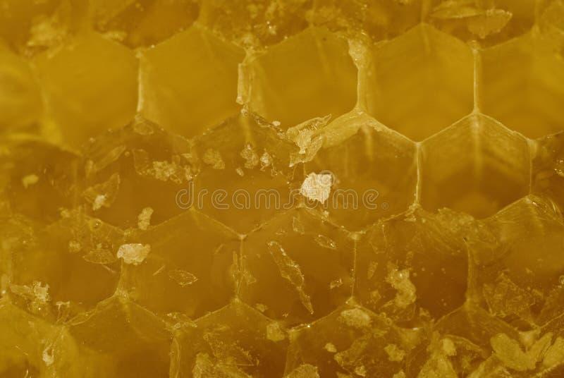 honeycell zdjęcie stock