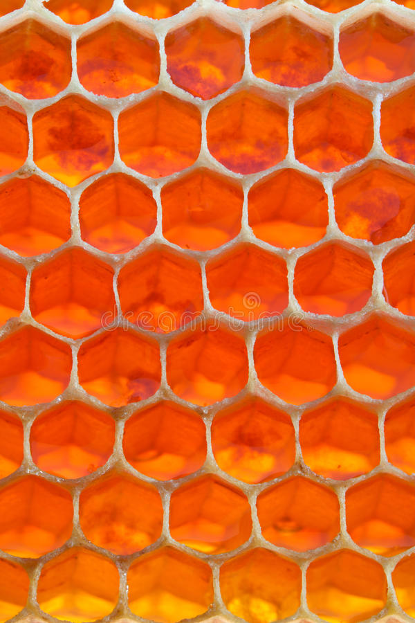 Download Honeycomb stock photo. Image of natural, nutrition, healthy - 16665672