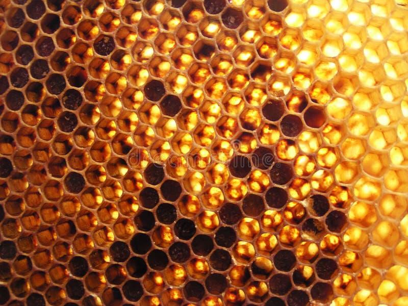 Honeycomb. Full of honey aginst the sun royalty free stock photo