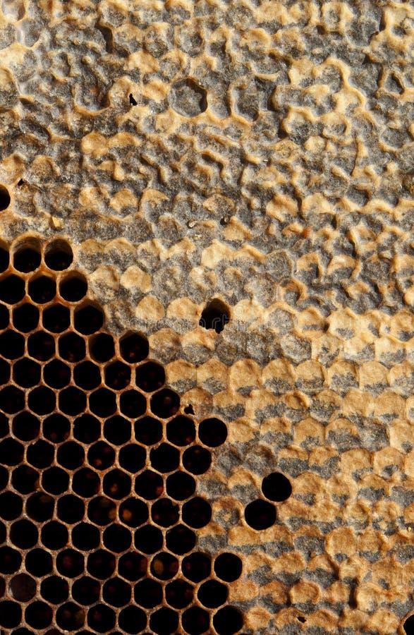 Honeycomb Royalty Free Stock Photo