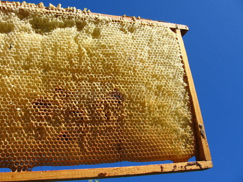 Honeycomb. With a wooden frame on the blue sky royalty free stock photo