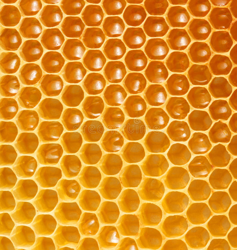 Honeycomb background stock photo image of lifestyle 26398108 download honeycomb background stock photo image of lifestyle 26398108 voltagebd Image collections