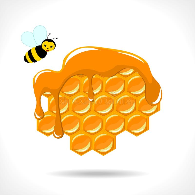 Download Honeycomb with a bee stock vector. Image of summer, hive - 25091208