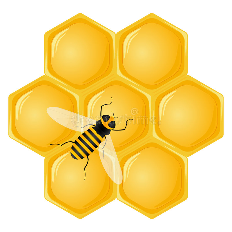 Honeycomb and bee. Isolated on a white background. Vector illustration vector illustration