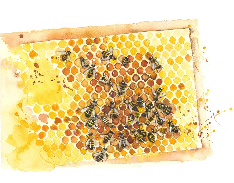 Honeycomb with bees watercolor painting illustration isolated on white background royalty free illustration
